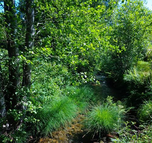 Bosque de ribeira. Río Sarela