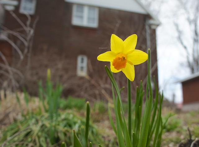 anteketborka.blogspot.com,   fleur