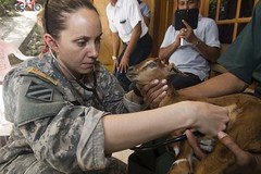U.S. Army Capt. Jane Lund, a veterinarian assigned to the 719th Medical Detachment Veterinarian Services, examines a sick baby goat during Pacific Partnership. (U.S. Navy/MC1 Dustin Q. Diaz)