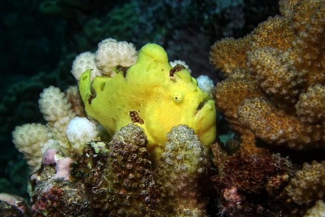 frog/yellow