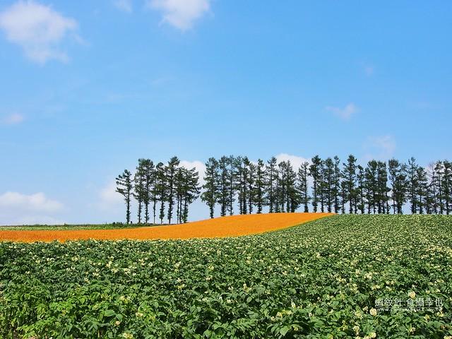 美瑛 赤麦の丘