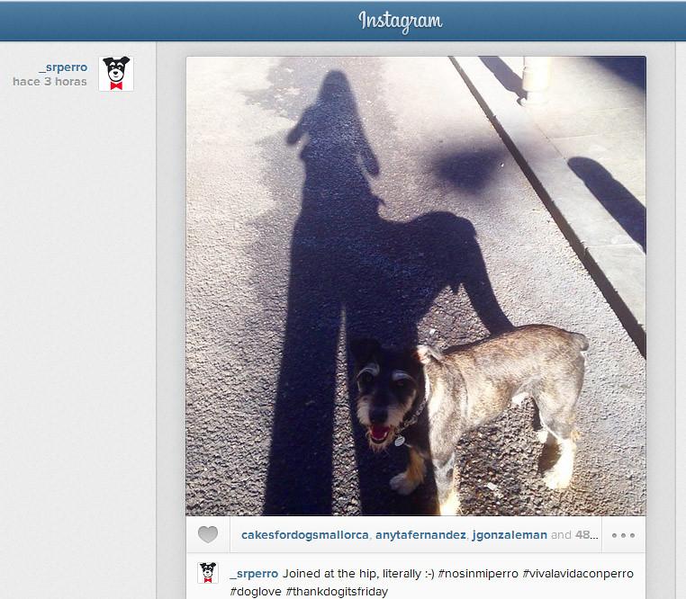 instagram_sr_perro