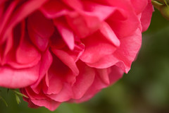 1306_nature photography day_121