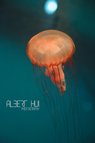 Jellyfish Light by Albert Hui 豆汁焦圈
