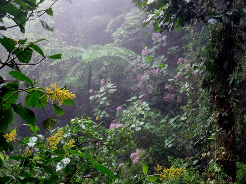 rain forest in the rain
