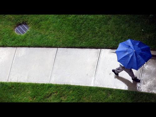 blue green grass rain june umbrella sidewalk viewfrom viewfrommyoffice 2013