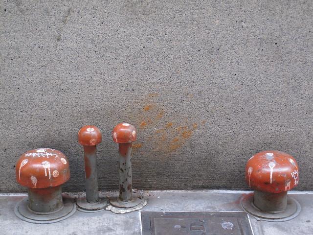 The rarely seen spores of the urban mushroom
