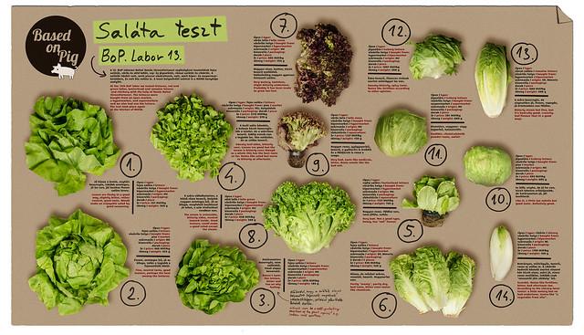 BoP labor saláta