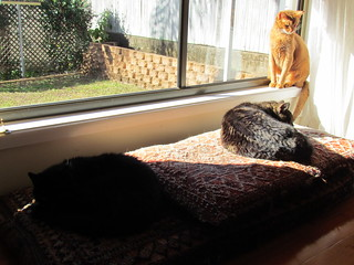 Three kitties sunning themselves