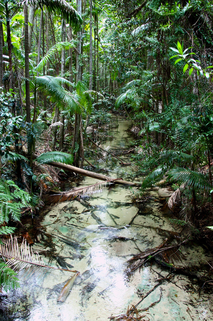 Fraser Island - the only place, where rainforest grows on sandy soil.