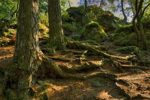 At the cliffs of the Teutoburger Wald 1