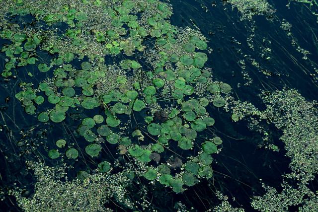 chertova river green leaves