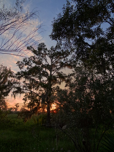 trees sunset louisiana barataria