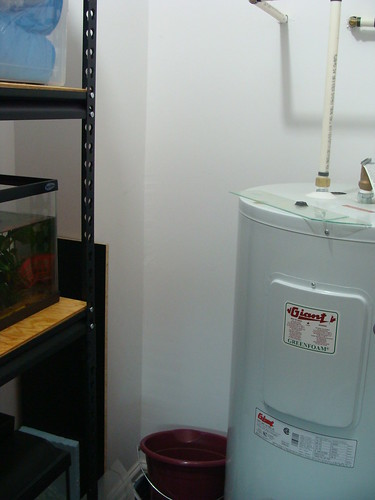 Fish room  - Page 2 10682923015_f958844ffb