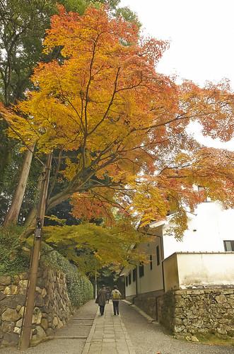 【写真】2013 紅葉 : 即宗院/2021-07-30/IMGP3455