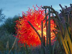 Chihuly in the Garden Desert Botanical Gardens_11 23 13_0109.JPG
