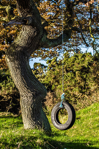 tree canon that lens outdoors photography eos prime countryside photo foto open with view angle artistic photos pics near air pic images swing have photographs photograph fotos 7d 28 60mm dslr which f28 contain tyre tyreswing sacriston oldtyre cwhatphotos nearsacriston