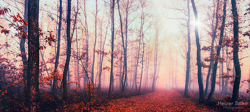 autumn trees nature leaves woods