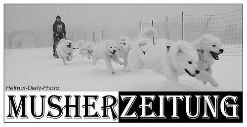 Harry-Weiss-Samojeden, Oberwiesenthal, Foto: Helmut Dietz, Musherzeitung, Bielefeld