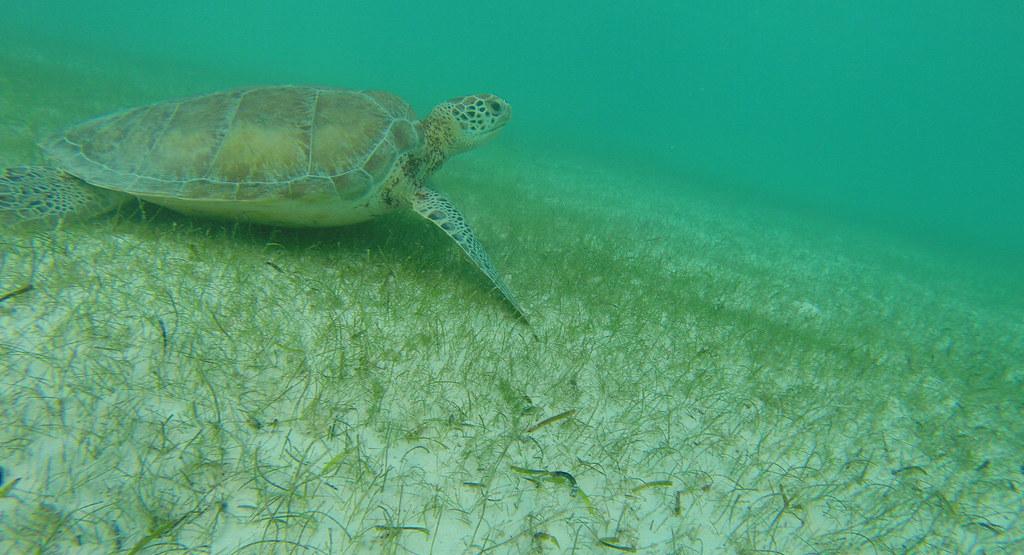 Yucatan trip photos from snorkling 11975941373_efc4e34722_b