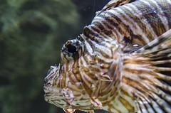 Georgia Aquarium -107