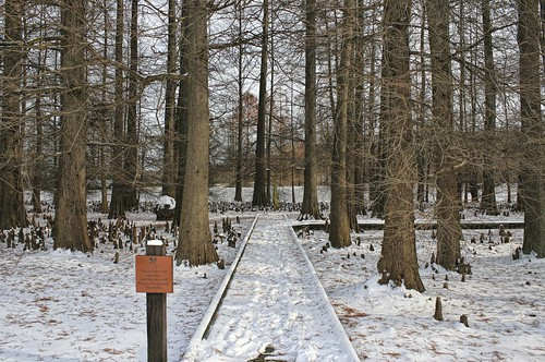 Dawes Arboretum: Cypress Swamp In Winter. Photo copyright Jen Baker/Liberty Images; all rights reserved. Pinning to this page is okay!