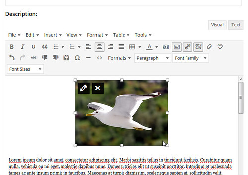 Text-Editor-Small-Pic-Crop-Hands