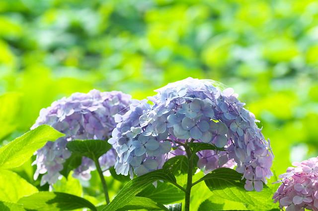 東京路地裏散歩 上野編 2014年6月21日