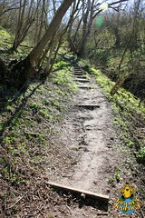 Clouts Wood, Wiltshire