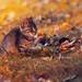 Autumn feline by Pásztor András