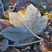 Frozen autumn
