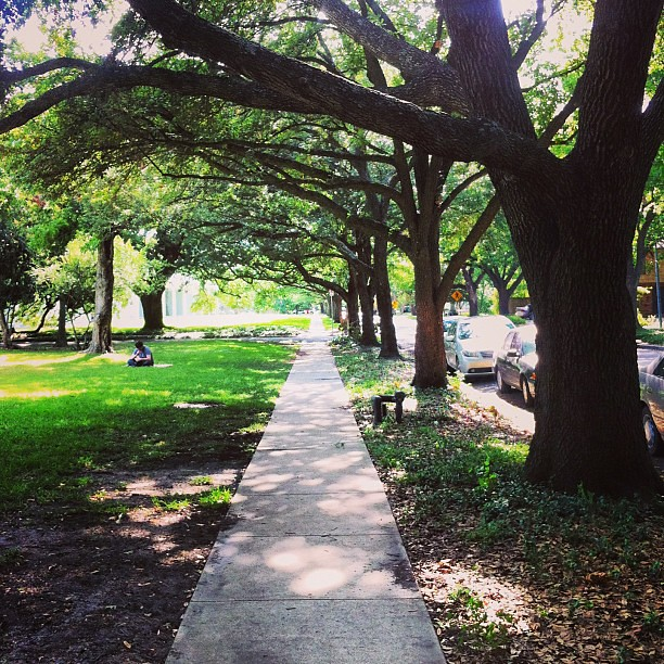 I do love a good tree-lined walkway.