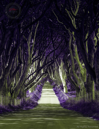 The Dark Hedges by xxx zos xxx