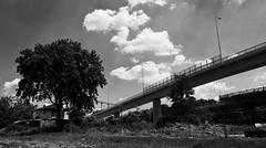 Ada Bridge - The Tree And The Overpass