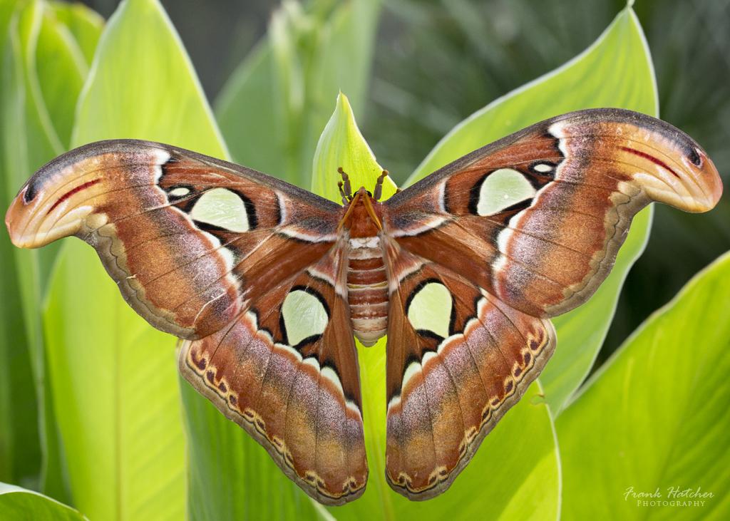 IMAGE: http://farm6.staticflickr.com/5508/9422867685_3e6b5bb5d0_o.jpg