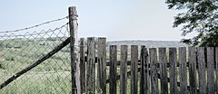 wire fencing, home fencing, grass, picket fence, wood, tree,