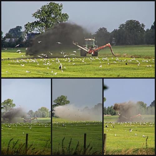 Collage 2013-08-13 modderspuiten trekker 1200px by edufloortje