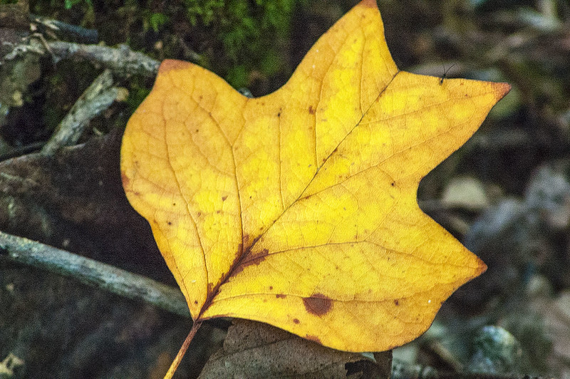 Yellowwood State Forest - October 12, 2013