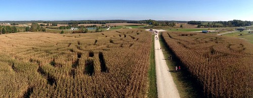 Corn maze at Holiday World