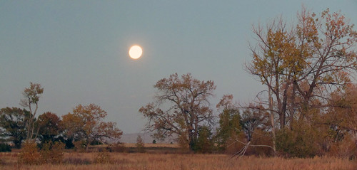 autumn trees sunset plants moon plant tree fall geotagged evening centennial colorado state full fullmoon moonrise springs cottonwood falcon coloradosprings co prairie plains floyd muaddib americanwest cottonwoods curtisroad westernusa coloradospringscolorado coloradospringsco centennialstate judgeorrroad floydmuaddib