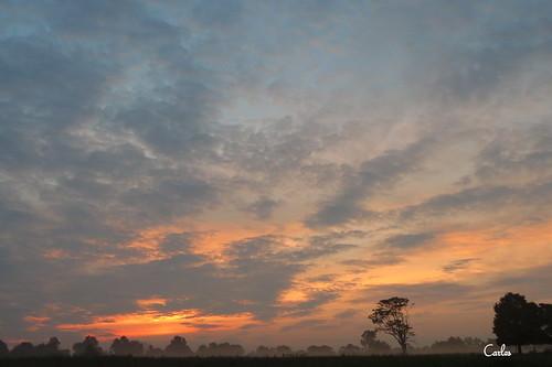 trees sunset orange clouds sunrise landscape outdoors northcarolina serenity