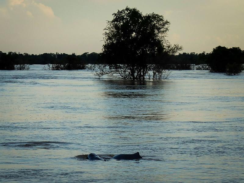 Irrawaddy dolfijnen spotten