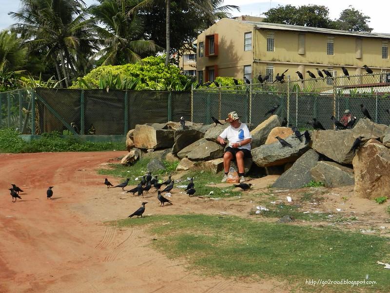 Птиц подкармливают туристы