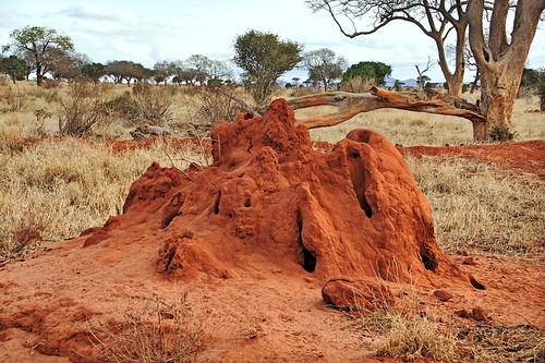 holiday building kenya east termites mound kenia ost termite tsavo reise termitemound hügel tsavoeast termiten termitenhügel kenyaholiday moundbuilding tsavoost moundbuildingtermites