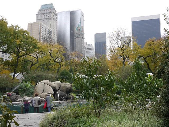 水, 2013-10-30 10:04 - Central Park Zoo