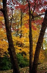 """Cincinnati – Spring Grove Cemetery & Arboretum """"3 Colors Past 3 Trunks"""""""