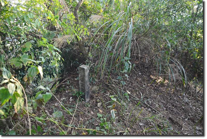 南觸口山榮民保育林水泥樁