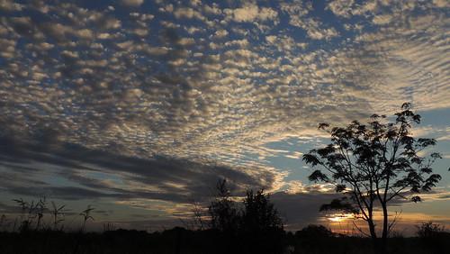 sunset contraluz arbol atardecer country campo ocaso siluetas lateafternoon roldan bemedetti diegostiefel