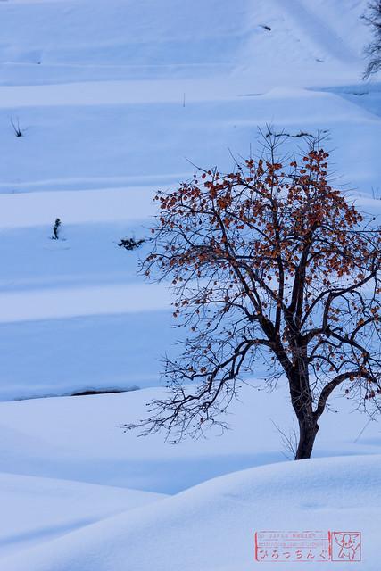 冬との調和