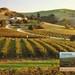 AU-214638  Vineyards, Barrossa Valley, South Australia. by postxwayk